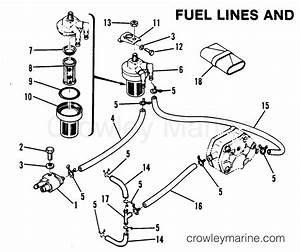 Fuel Lines And Filter