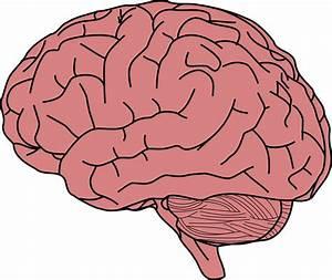 Clipart - Human Brain