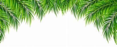Palm Leaves Border Clip Leaf Transparent Clipart