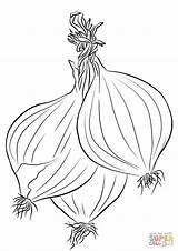 Onions Coloring Three Printable Categories sketch template