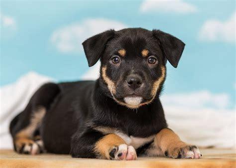 adoption fees nevada humane society  shelters