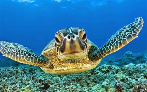 sea turtle hd wallpapers earth blog