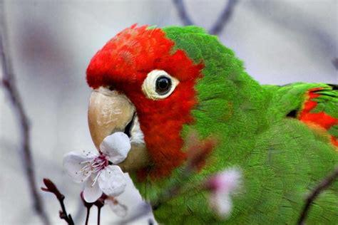schöne bilder kaufen papageien 50 unikale fotos zum inspirieren archzine net