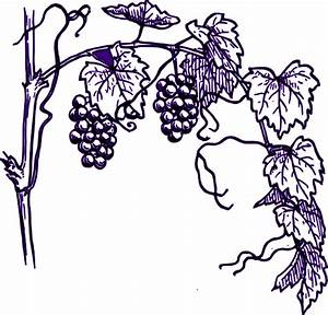 Purple Grape Vine Clip Art At Vector Clip Art