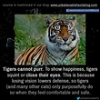 Tiger facts. | Tiger facts, Animals, Unbelievable facts