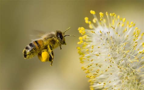 honey  hd wallpaper background images