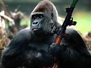 Angry Gorilla Fighting
