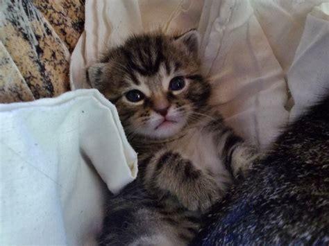 bild  aus beitrag die  schoensten katzenbilder die