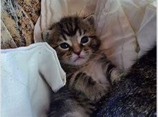 Die 100 schönsten Katzenbilder, die man unbedingt gesehen
