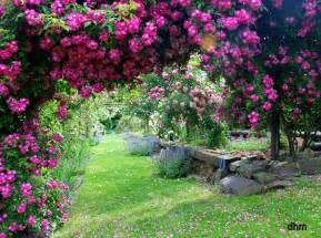 image jardin fleuri
