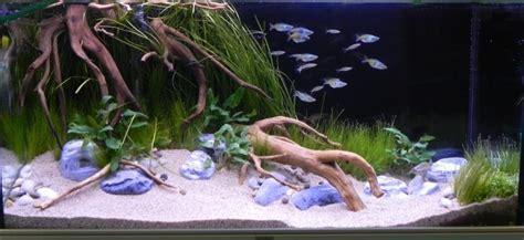 d 233 coration aquarium racine