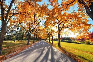 Nature, Trees, Road, Sunlight, Wallpapers, Hd, Desktop, And, Mobile, Backgrounds
