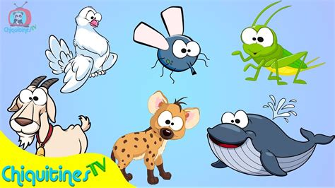 sonidos de los animales cancion infantil para ninos el