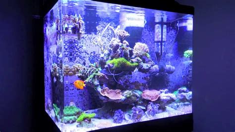 s sea max 130d reef tank