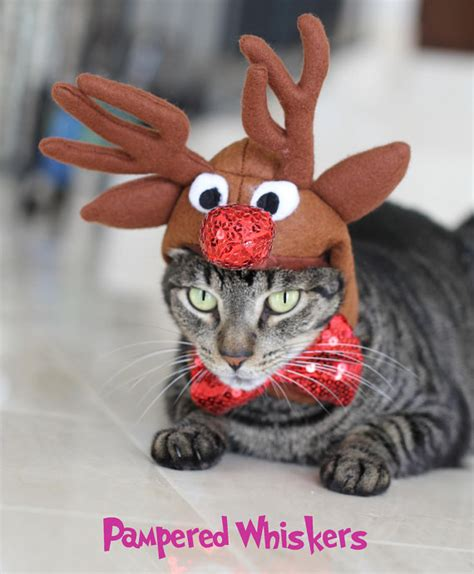 cats wearing ridiculous christmas hats