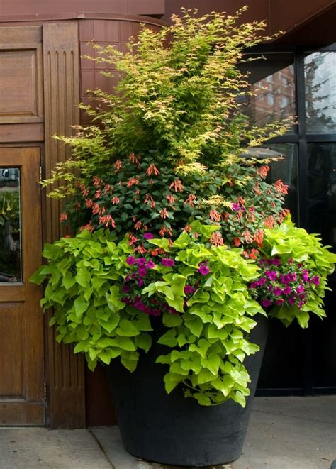 Summer Beautification Commercial Planters (hole's