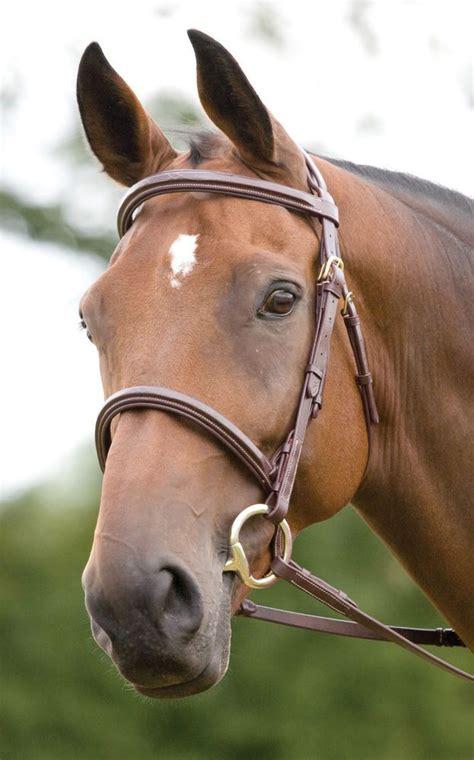 shires salisbury fairford trense  pferd leder