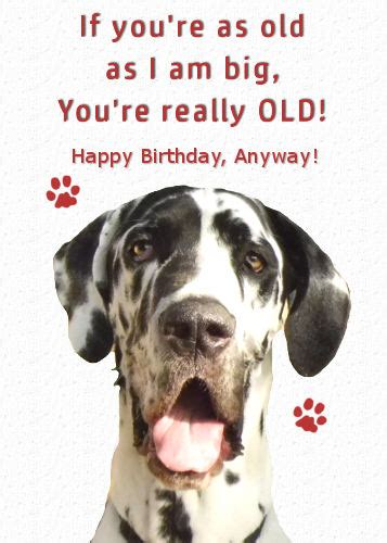 great dane funny  age birthday  pets ecards greeting cards