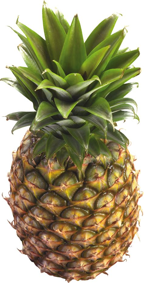 pineapple png image purepng  transparent cc png