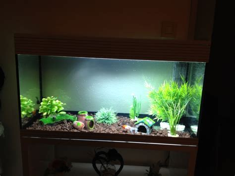 aquarium 100l pas cher paul 1233 24hourcredit info