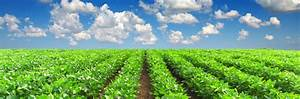 Agribusiness and Food   Michigan Law Firm – Attorneys ...