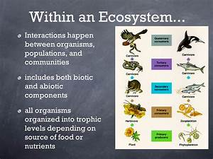 Ecosystems And Their Components