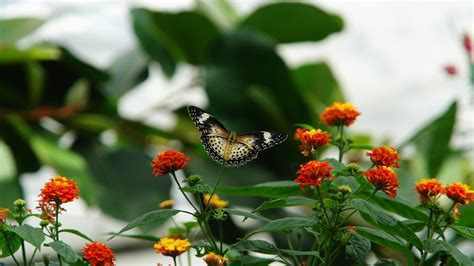 Amazing free hd butterfly wallpapers collection. 50+ Beautiful Butterfly Wallpapers for Desktop on WallpaperSafari