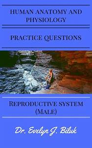 Human Anatomy And Physiology Practice Questions