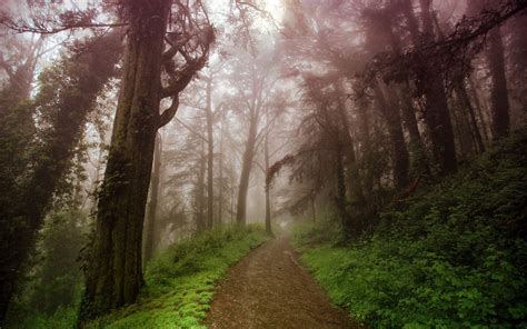 foggy forest backgrounds   wallpaperwiki