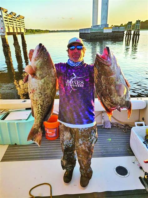 grouper june offshore capt adams season report re forecast guaranteed reel catch rocks able almost dead weight them