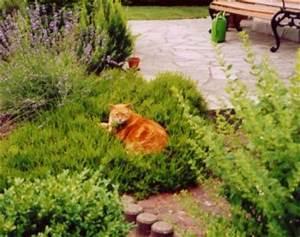 Katze Im Garten Begraben : zeigt mal eure s en seite 6 ~ Lizthompson.info Haus und Dekorationen