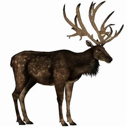Deer Bush Antlered Ungulates Toed Even Wiki