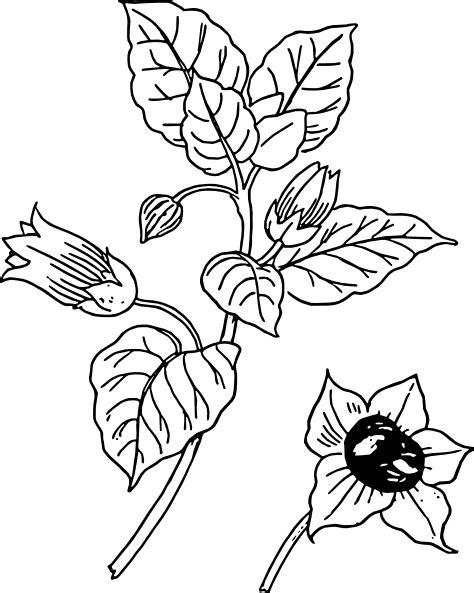 Belladonna Clip Art at Clker.com - vector clip art online
