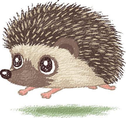 Hedgehog Clipart Hedgehog Clipart 43 Cliparts