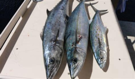 fishing report indian river wade fishing