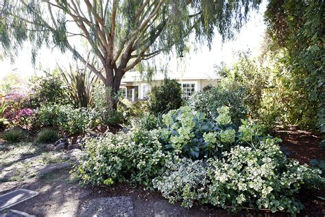 revive gardens some easy ways to revive your garden san francisco chronicle