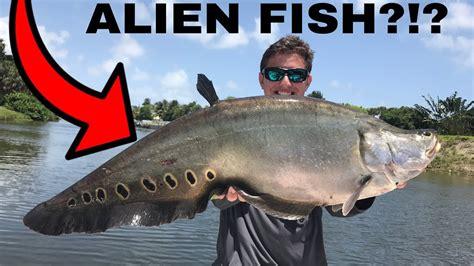 freshwater florida fishing lake ida south bass