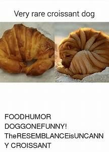 25+ Best Memes About Croissant Dogs | Croissant Dogs Memes
