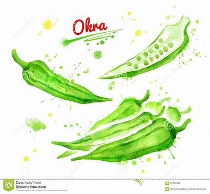 Okra Watercolor Illustrations Paint Drawing Illustration