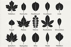 Pflanzen Bestimmen Nach Bildern : bl tter bestimmen gr ser im k bel berwintern ~ Eleganceandgraceweddings.com Haus und Dekorationen