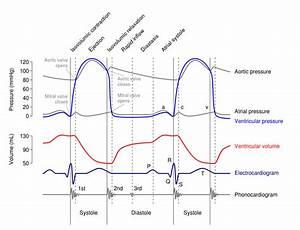 Isovolumetric Contraction