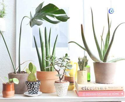 Zimmerpflanzen: Pflegetipps