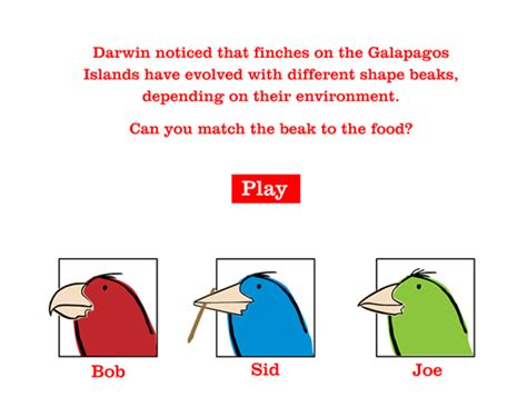 darwin finches worksheet free worksheets library