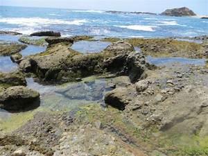 Treasure Island Beach Laguna Beach Ca California Beaches