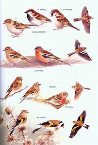 The Field Guide To The Birds Of New Zealand  Barrie