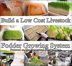 This Tutorial Of How To Build A Low Cost Livestock Fodder