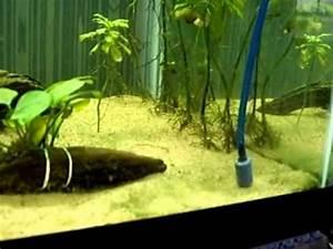 Blue Green Algae/Cyanobacteria aquarium treatment #6 - YouTube