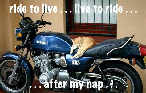 Cats Love Motorcycles, And These Photos Prove It