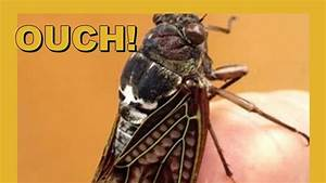 Survey Statistics Ouch Drilled By Cicada Youtube