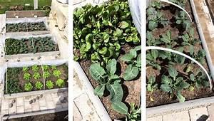Pflanzen Im Juli : was kann man im juli noch pflanzen ostseesuche com ~ Orissabook.com Haus und Dekorationen